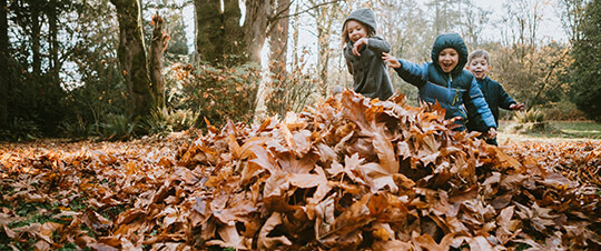 Kids jumping into a big fall leaf pile